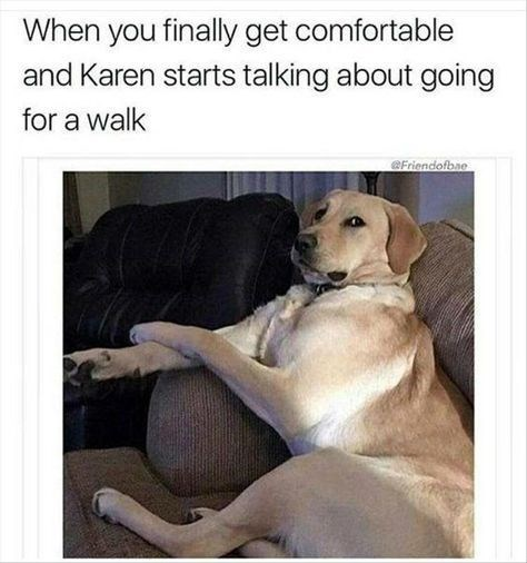 Dog - When you finally get comfortable and Karen starts talking about going for a walk aFriendofbae