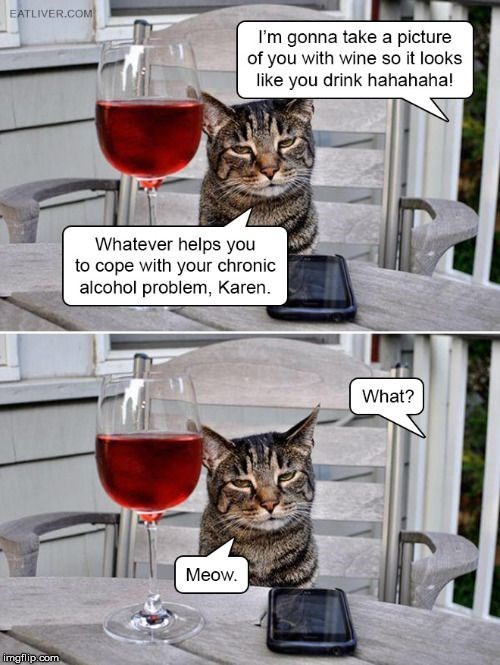 Cat - EATLIVER.COM I'm gonna take a picture of you with wine so it looks like you drink hahahaha! Whatever helps you to cope with your chronic alcohol problem, Karen What? Meow. imgflip.com