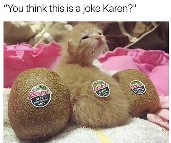 "Photo caption - ""You think this is a joke Karen?"" Tespr Tospr Green 4030 4033"