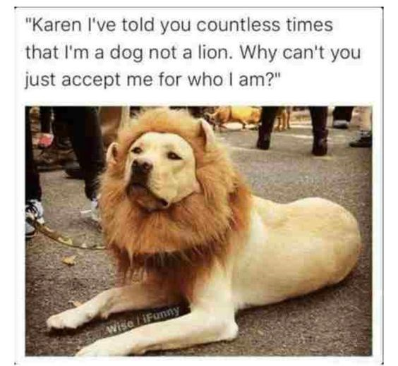"""Vertebrate - """"Karen I've told you countless times that I'm a dog not a lion. Why can't you just accept me for who I am?"""" Wise iFunny"""