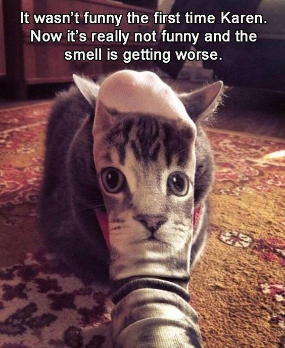 Cat - It wasn't funny the first time Karen. Now it's really not funny and the smell is getting worse.