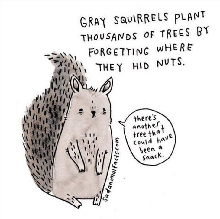 Text - GRAY SQUIRRELS PLANT THOUSANDS OF TREES BY FORGETTING WHERE THE Y HID NUTS there's another, tree that Could have been a Snack Sadanimalfactscom