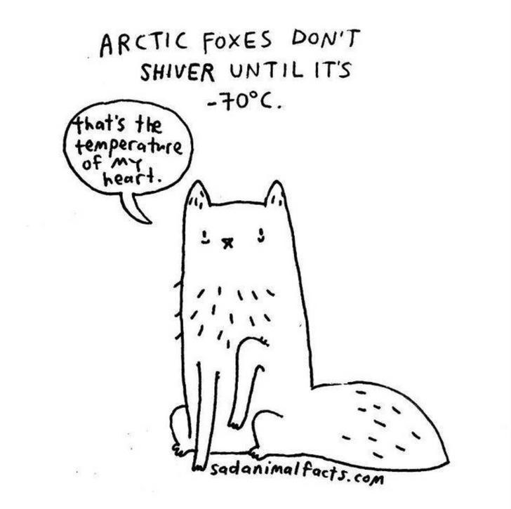 White - ARCTIC FOXES DoN'T SHIVER UNTIL ITS -70°C Ahat's the temperature of mY heart sadanimalfacts.com