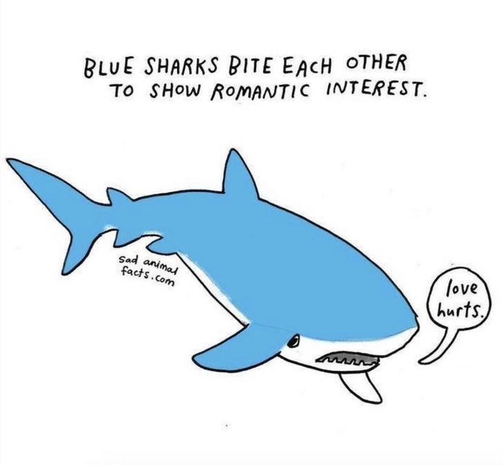 Fish - BLUE SHARKS BITE EACH OTHER To SHOW ROMANTIC INTEREST. love hurts Sad animal facts.com