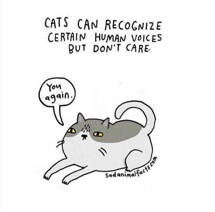 Cartoon - CATS CAN RECOGNIZE CERTAIN HUMAN VOICES BUT DON'T CARE You again Sadanimalfactscom 8