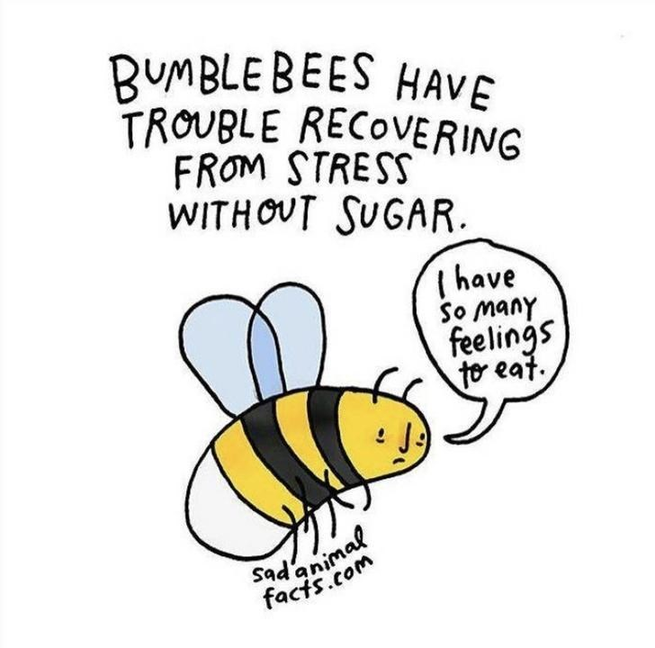 Honeybee - BUMBLE BEES HAVE TROUBLE RECOVERING FROM STRESS WITHOUT SUGAR Ihave So many feelings tor eat. Sadanimal facts.com