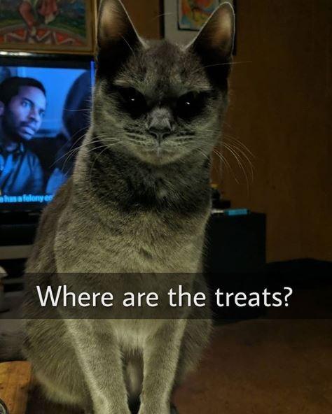 Cat - has a felony Where are the treats?