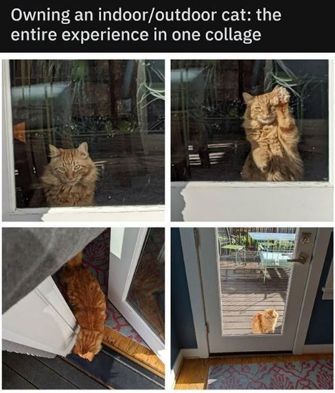 Cat - Owning an indoor/outdoor cat: the entire experience in one collage