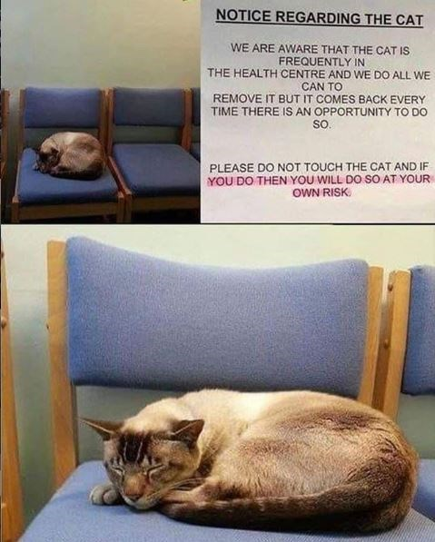 Cat - NOTICE REGARDING THE CAT WE ARE AWARE THAT THE CAT IS FREQUENTLY IN THE HEALTH CENTRE AND WE DO ALL WE CAN TO REMOVE IT BUT IT COMES BACK EVERY TIME THERE IS AN OPPORTUNITY TO DO sO. PLEASE DO NOT TOUCH THE CAT AND IF YOU DO THEN YOU WILL DO SO AT YOUR oWN RISK.