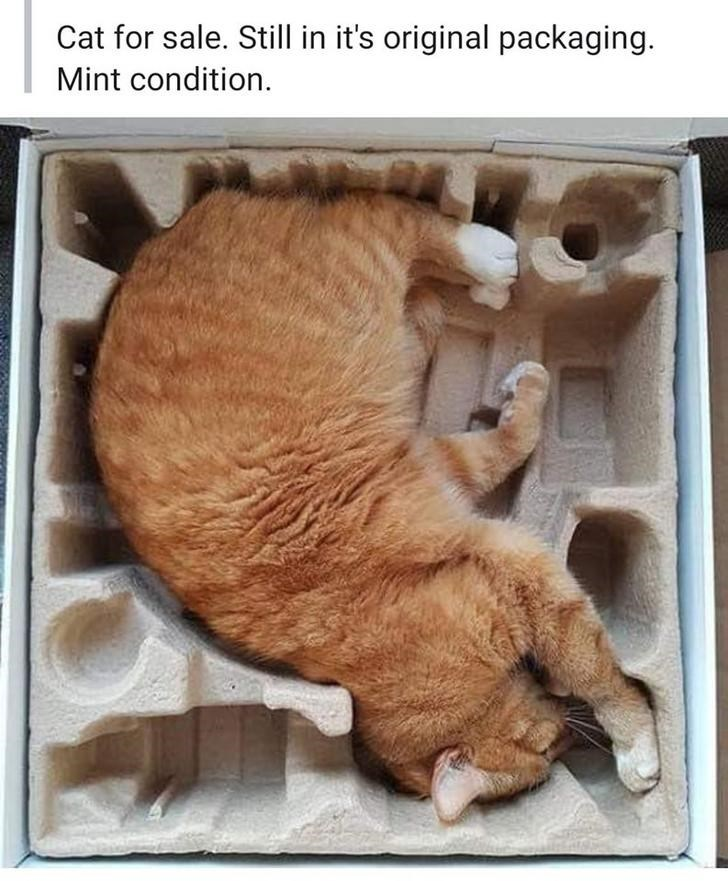 Cat - Cat for sale. Still in it's original packaging. Mint condition.
