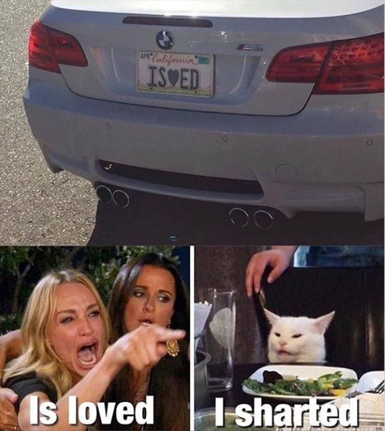 cat memes - 9380342272