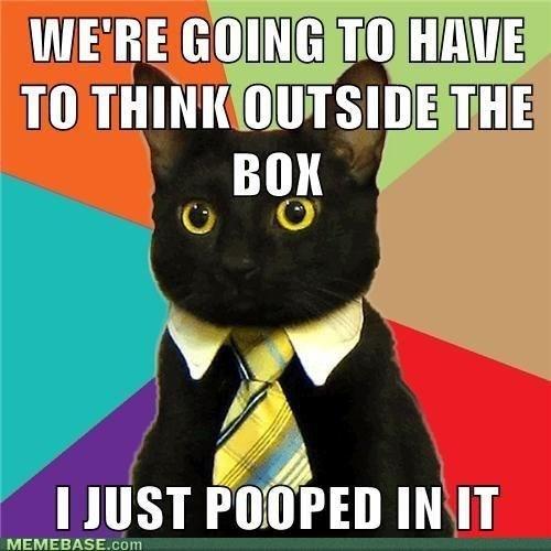 cat memes - 9380359936