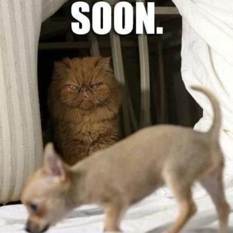cat memes - 9380361984