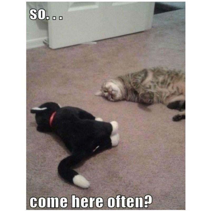 cat memes - 9380376064
