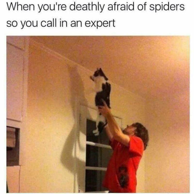 cat memes - 9380378624