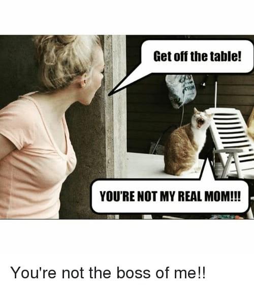 funny cat memes - 9380378880