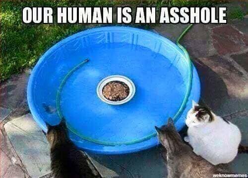 funny cat memes - 9380380160