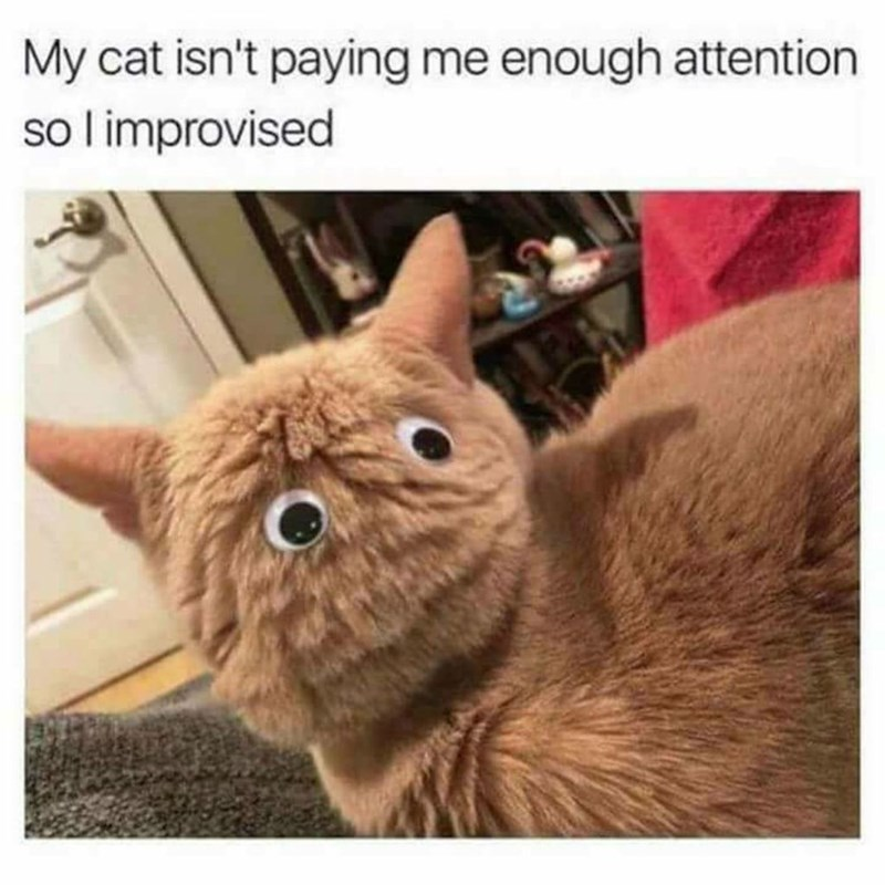cat memes - 9380380416