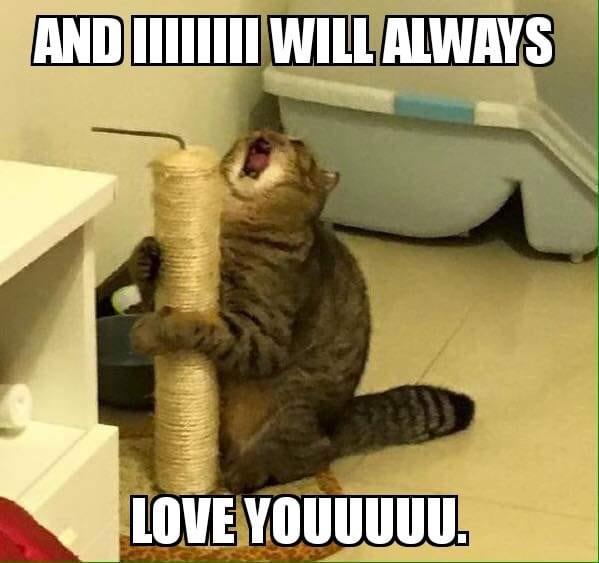 funny cat memes - 9380380672