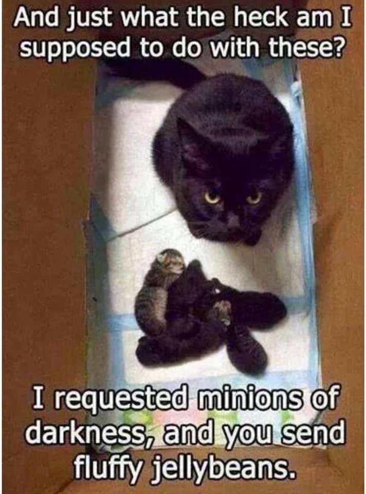 funny cat memes - 9380381184