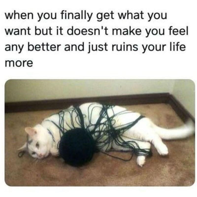 cat memes - 9380381440