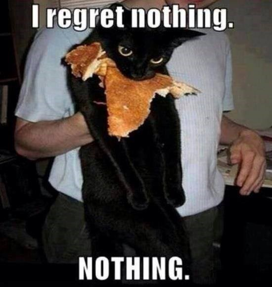 funny cat memes - 9380381696