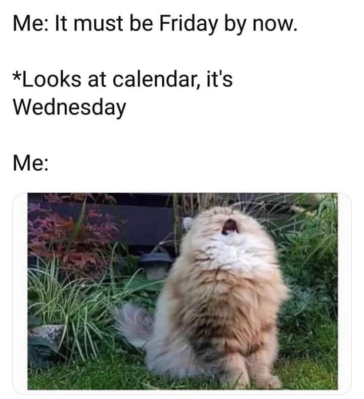 funny cat memes - 9380382976
