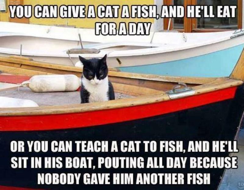 cat memes - 9380384000