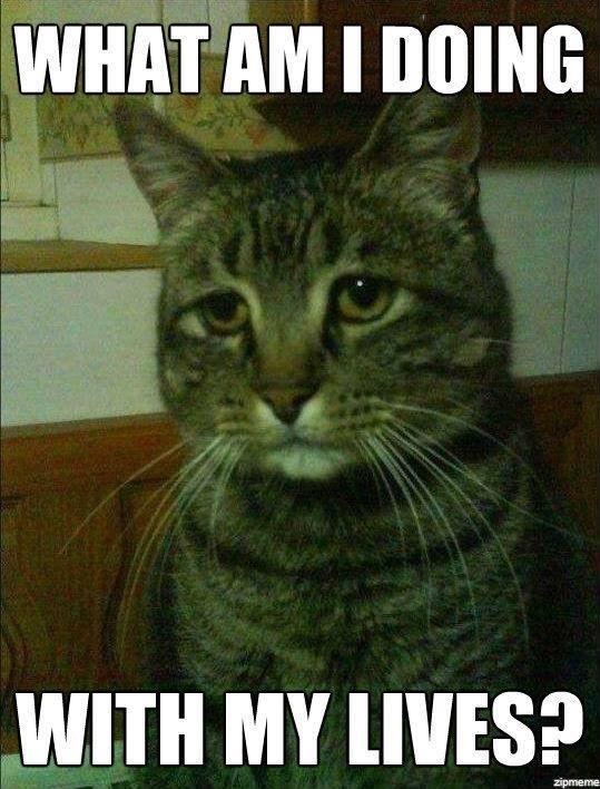 funny cat memes - 9380384256