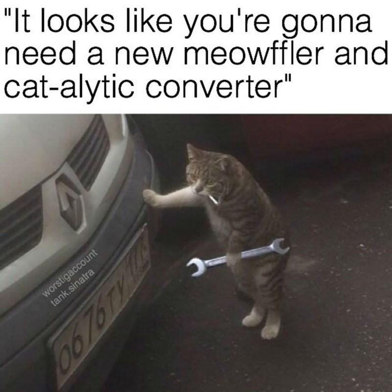 cat memes - 9380385024