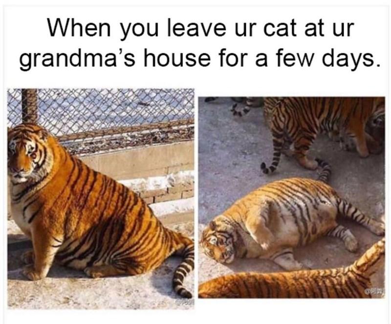 cat memes - 9380386560
