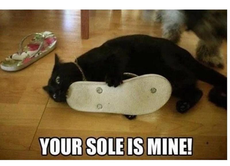 funny cat memes - 9380387584