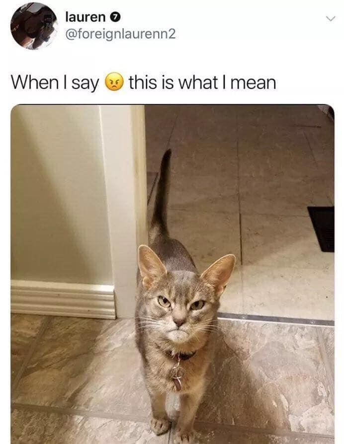 funny cat memes - 9380388352