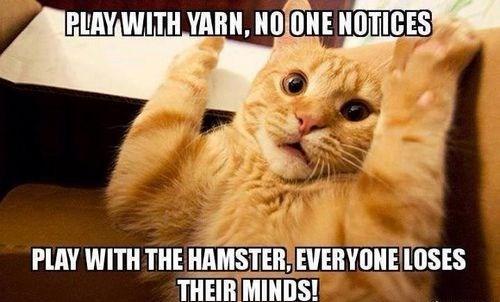 cat memes - 9380388608