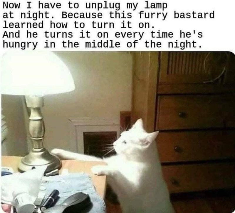 funny cat memes - 9380391680