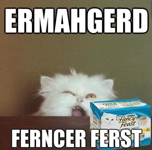 funny cat memes - 9380392704