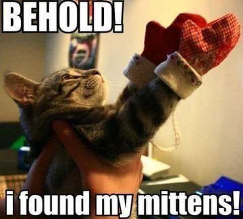 funny cat memes - 9380394496