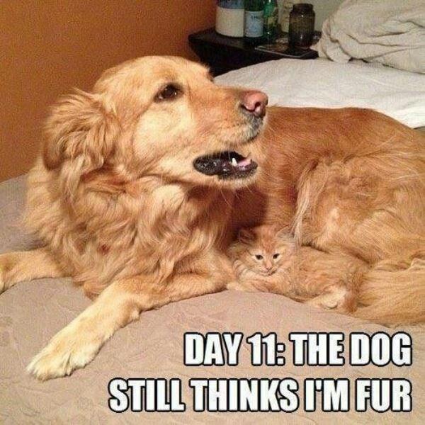 cat memes - 9380395264