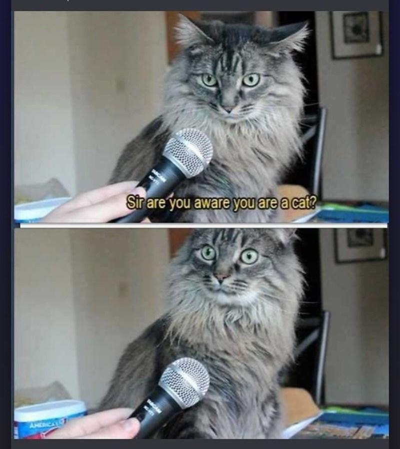 funny cat memes - 9380395520