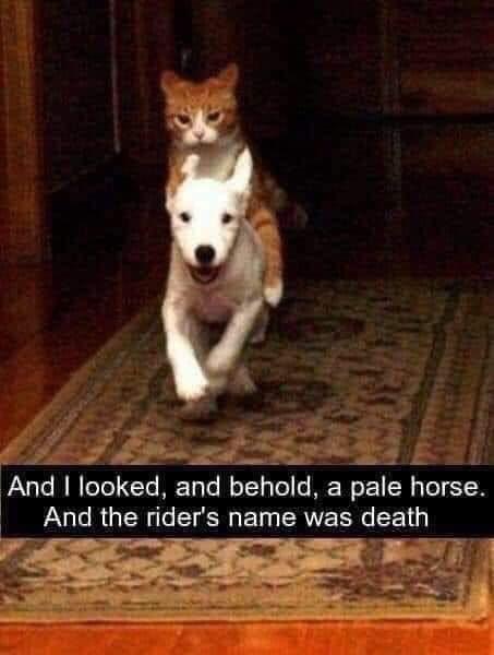 funny cat memes - 9380397824