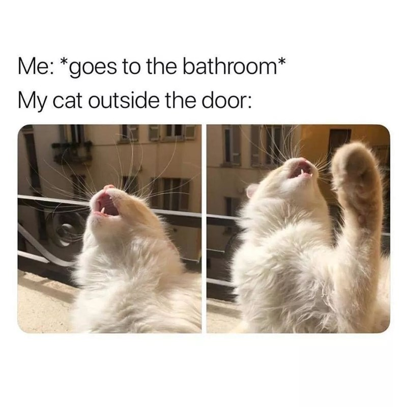 funny cat memes - 9380399360