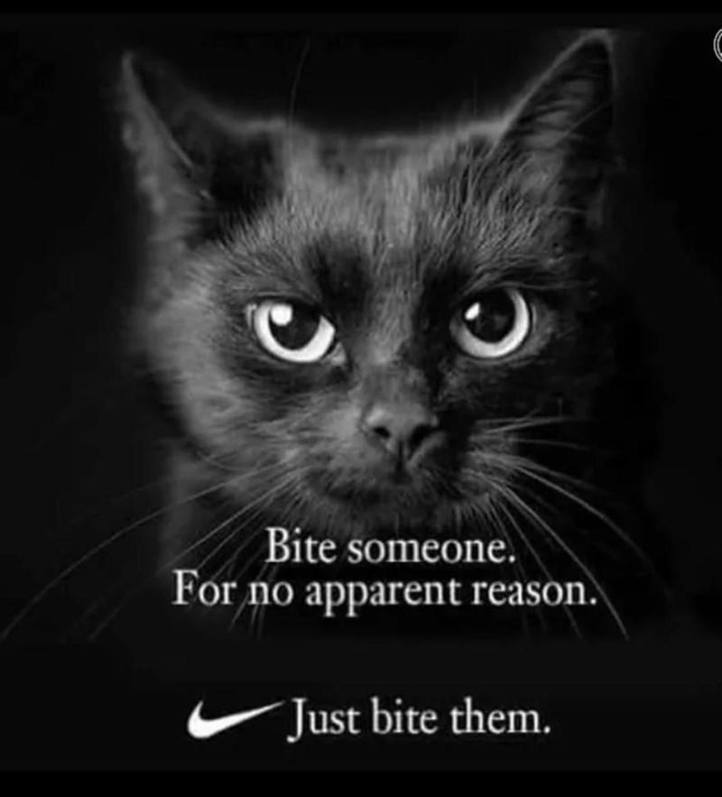 funny cat memes - 9380400384