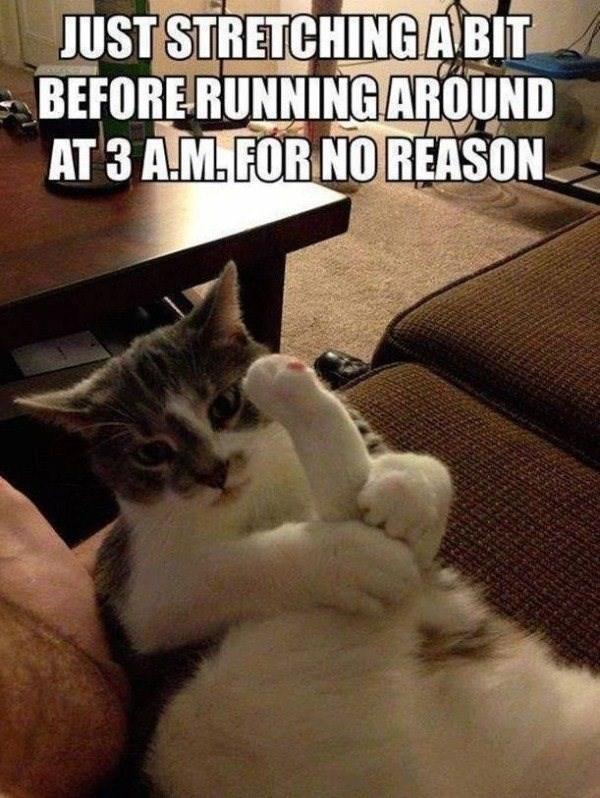 cat memes - 9380401408