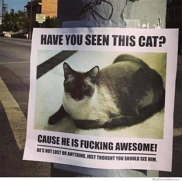 funny cat memes - 9380402432
