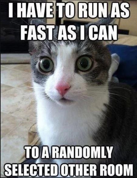 funny cat memes - 9380413696