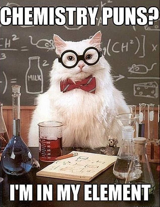 funny cat memes - 9380418560