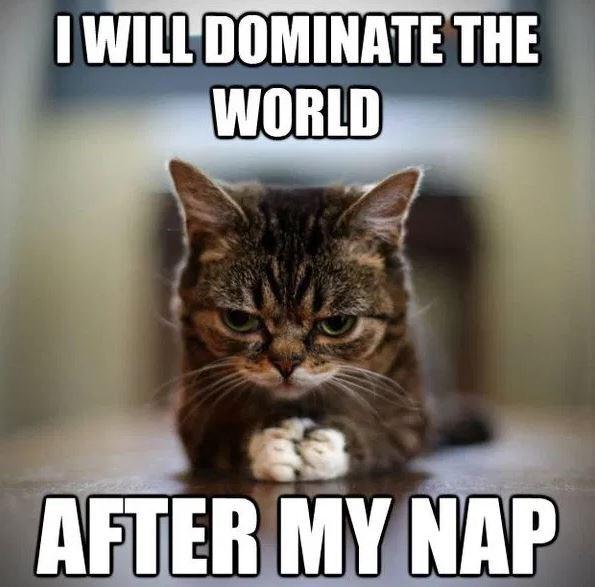 funny cat memes - 9380419328
