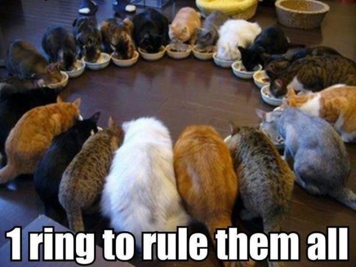 funny cat memes - 9380419584