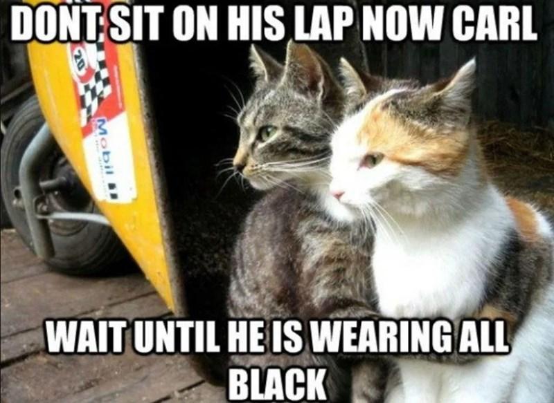 funny cat memes - 9380423168
