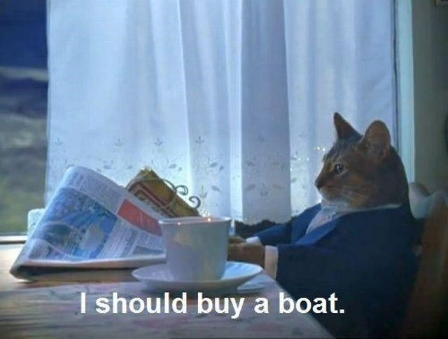 cat memes - 9380423680